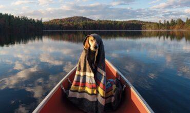 Гид: как подготовиться к путешествию с животным