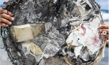 Напиши комментарий – помоги океану: как поддержать акцию Back Our Oceans