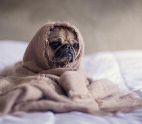 Сезон простуд: как не заболеть осенью