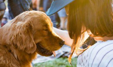 Гулять с собакой полезнее, чем заниматься в тренажерном зале