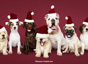 15 фотостудий для новогодней съемки с питомцем