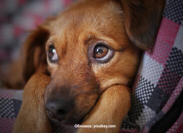 Опасности для животных в городе: как не навредить питомцу