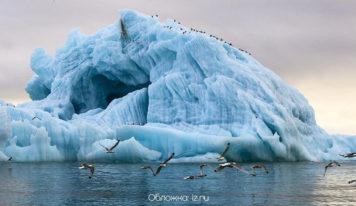 WWF России создал образовательную платформу об изменении климата