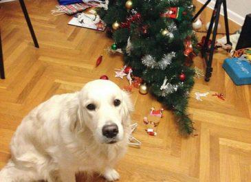 Создаем новогоднее настроение: где купить праздничный декор