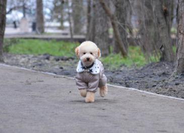 Теперь официально: в Екатеринбурге открыли парк «Зеленая Роща»