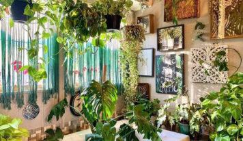 7 неприхотливых растений из интерьеров Pinterest