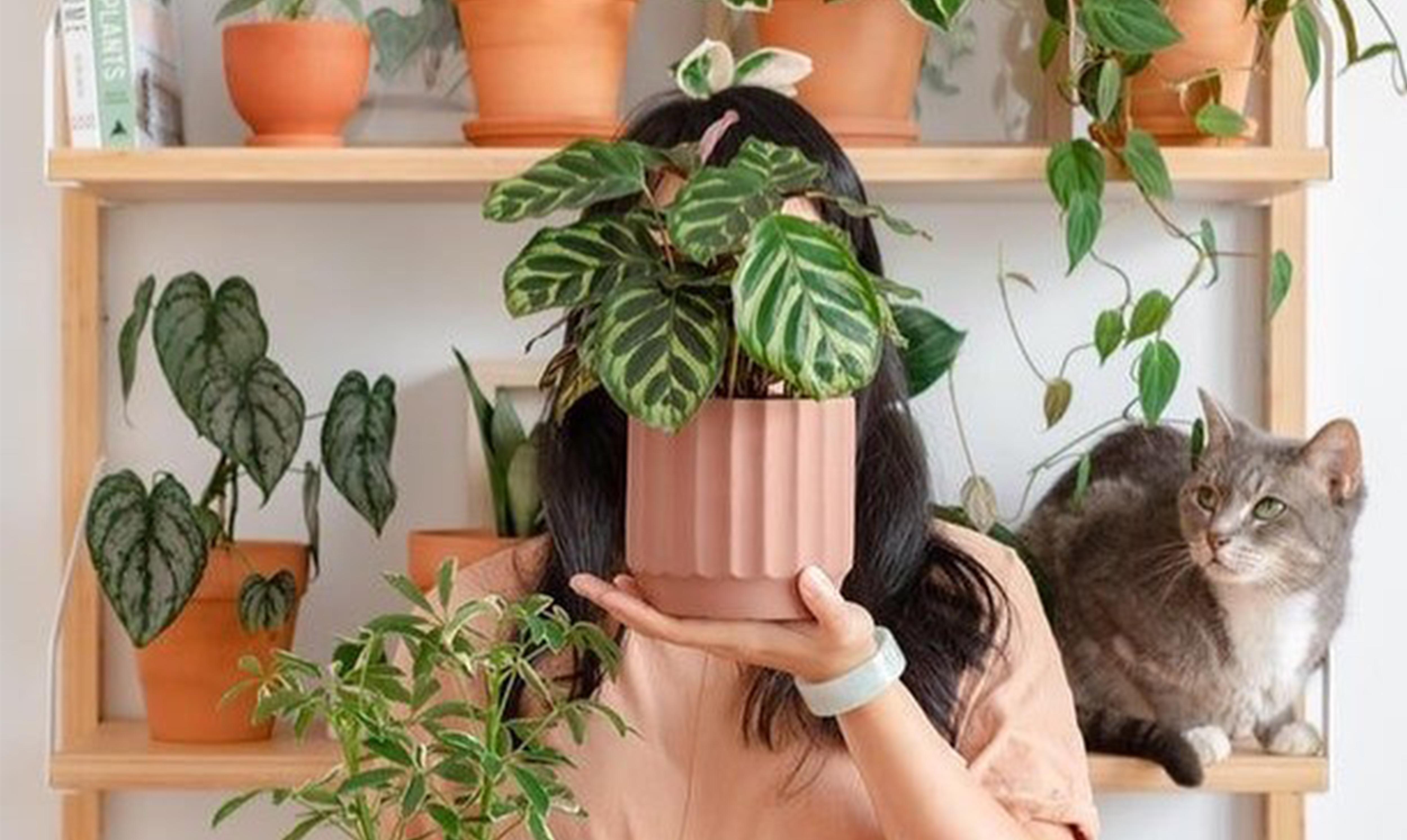 Цветочный своп, грин-маркет: фестиваль домашних растений в Екатеринбурге