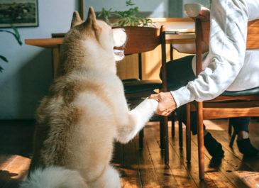 На карте Екатеринбурга теперь отмечены dog-friendly заведения