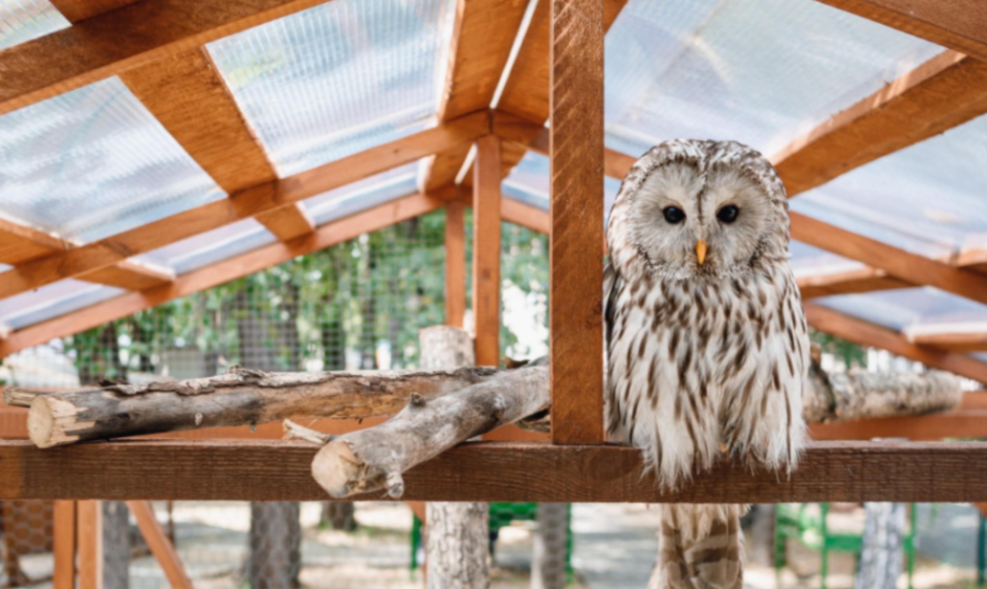 Городская ферма с животными открывается в Парке Маяковского