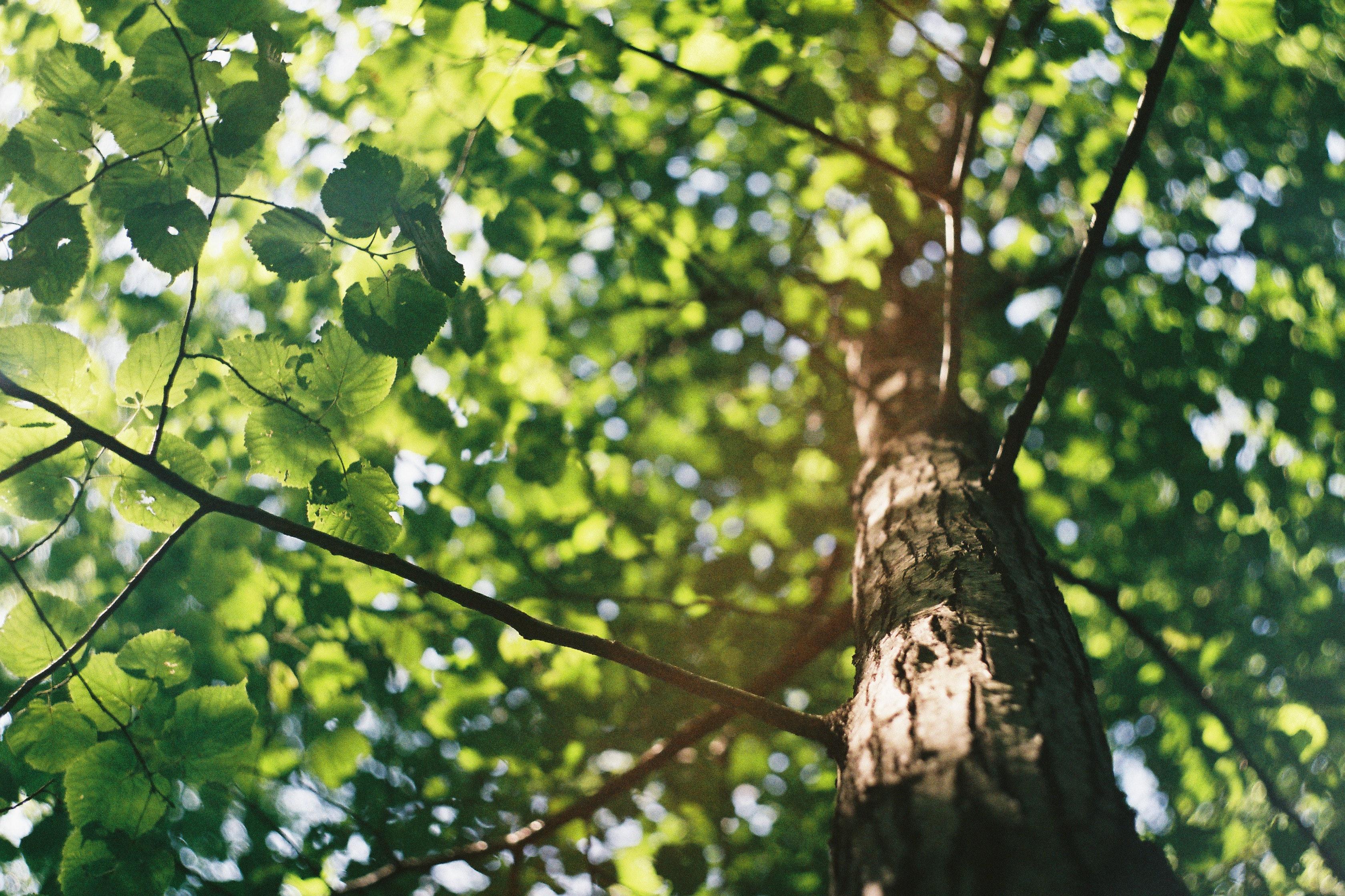В Екатеринбурге хотят сохранить вековые деревья: открыт благотворительный сбор на работы