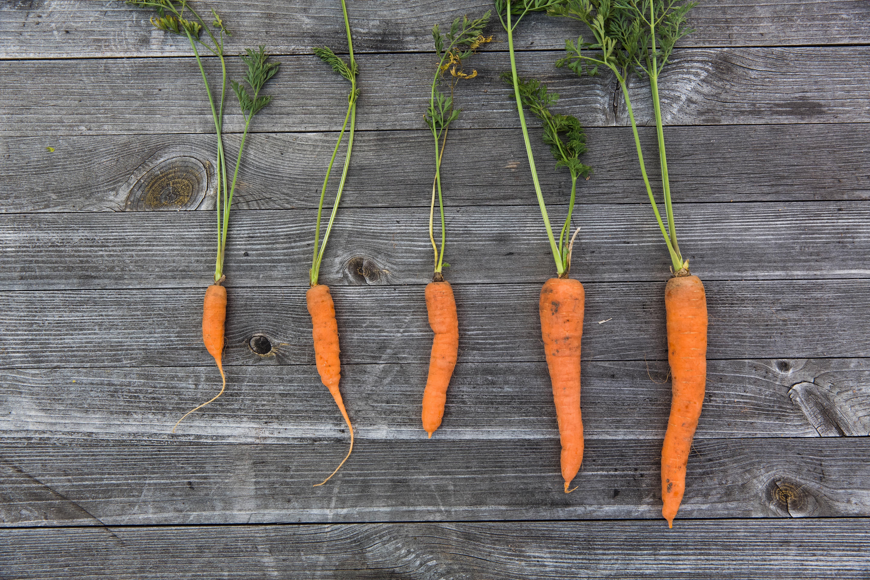 В парке Маяковского можно будет вырастить свой урожай